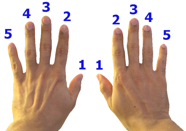 How to Number Your Fingers for Piano Lessons